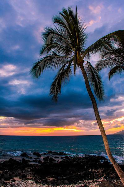 Maui Night Music   Hwp047 Art   Pictures Plus