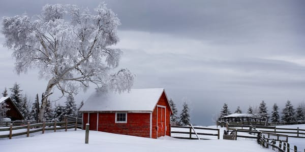 Little Red Shed | Terrill Bodner Photographic Art