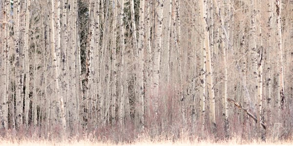 Into the Woods | Terrill Bodner Photographic Art