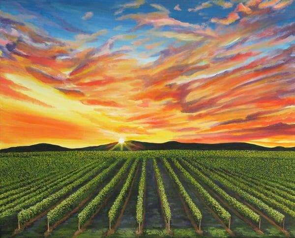 South Okanagan vineyard sunset
