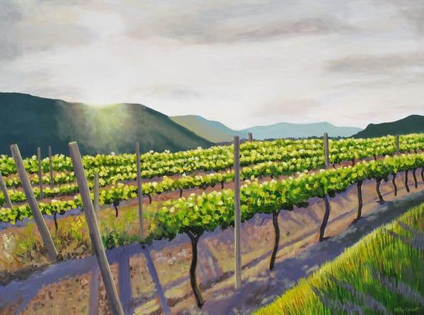Okanagan vineyard in Oliver, BC