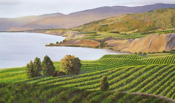 Evening view of the Naramata Bench vineyards