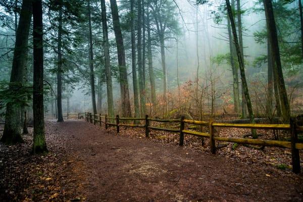 Foggy Morning Photography Art | Scott Krycia Photography