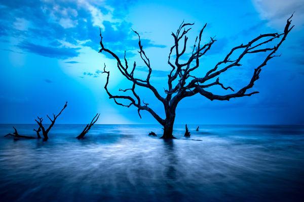 Jekyll Island Driftwood Photography Art | Scott Krycia Photography