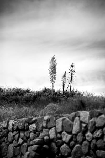 Yucca At Tumble Inn Photography Art | Sydney Croasmun Photography