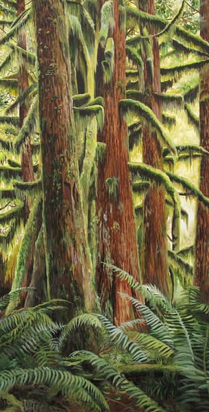 Mossy trees on the west coast of Vancouver Island