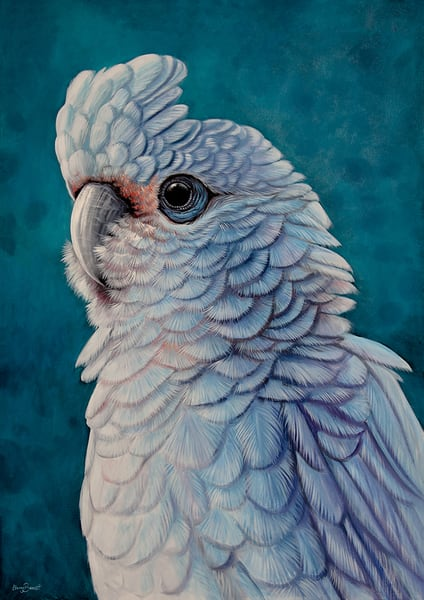 Cordelia - Little Corella