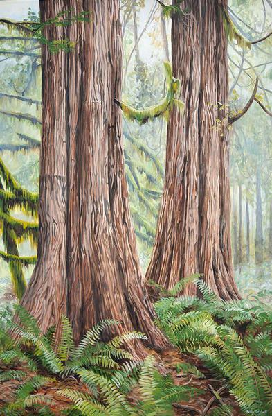 Cedar trees in Tofino Ucluelet, BC