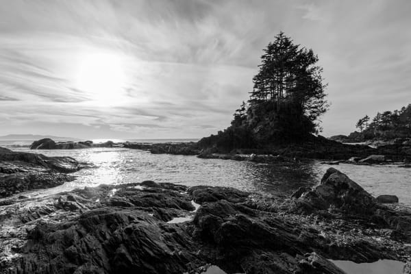 Terrill Bodner Photographic Art | Botanical Beach
