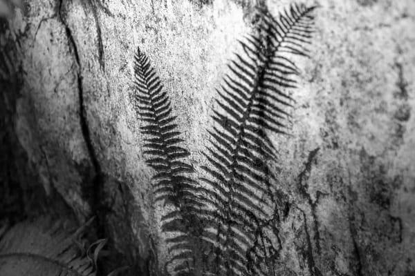 Terrill Bodner Photographic Art | Avatar Grove No 1