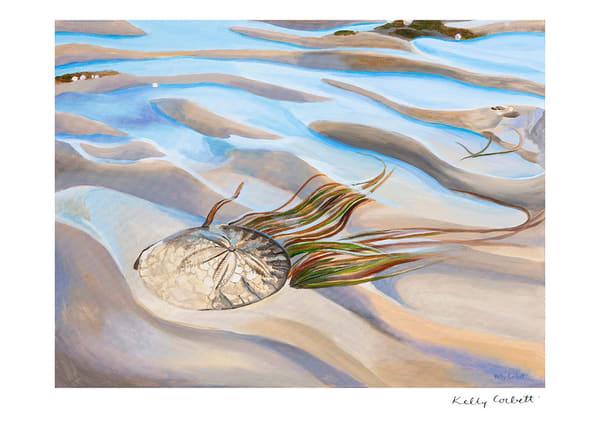Sand dollar nautical west coast art card
