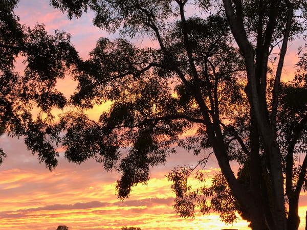 Sunset Tree Silhouette Art | Off The Edge Art