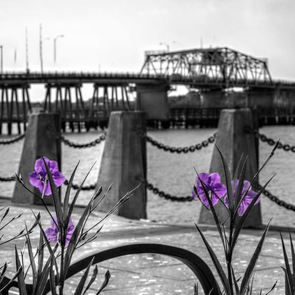 Pop Of Spring Art | Willard R Smith Photography