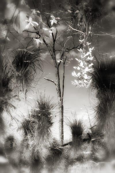 L1001617 Edit Photography Art | Nature's Art Productions