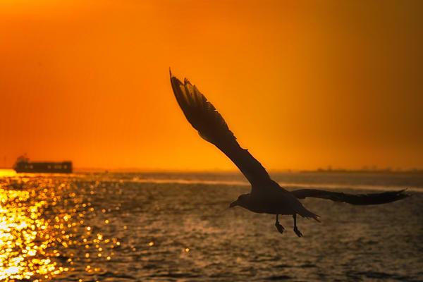 Seagull F Light Photography Art   nancyney