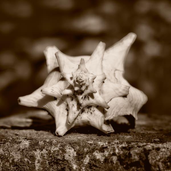 Sea Shell Photography Art | nancyney