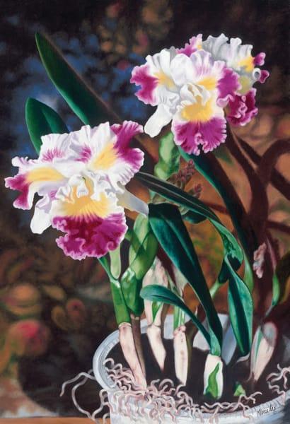 Potted Orchids   Original Art   Mercedes Fine Art
