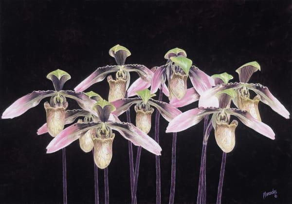 Orchids   Original Art   Mercedes Fine Art