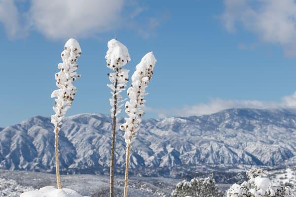 Snow In The High Desert Photography Art | Sydney Croasmun Photography