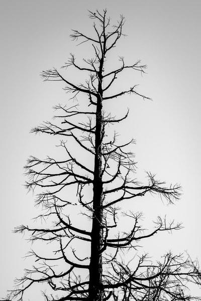 Sandberg Standing Photography Art | Sydney Croasmun Photography