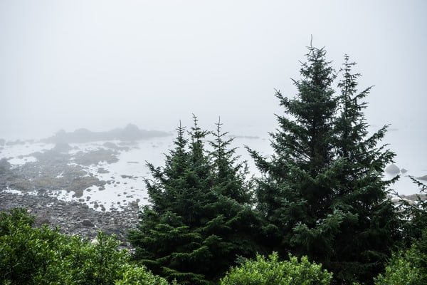 Pine Trees on the Beach - Ozette, Washington landscape photograph print