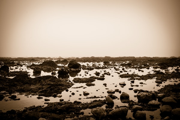 Coastal Study in Black and White #3 - foggy morning on the beach, in Ozette, Washington photograph print