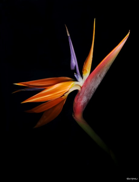 Bird Singleadj  Photography Art | Koral Martin Healthcare Art
