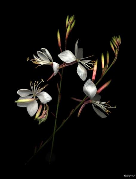 Fragile600  Photography Art | Koral Martin Healthcare Art