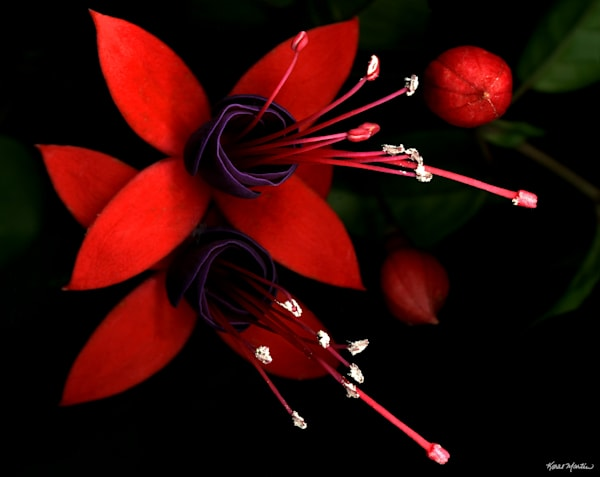 Fushia Cropped Small  Photography Art | Koral Martin Healthcare Art