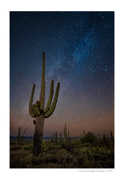 Saguaro Under The Milky Way   Signed 2019 Photography Art | Carol Brooks Parker Fine Art Photography