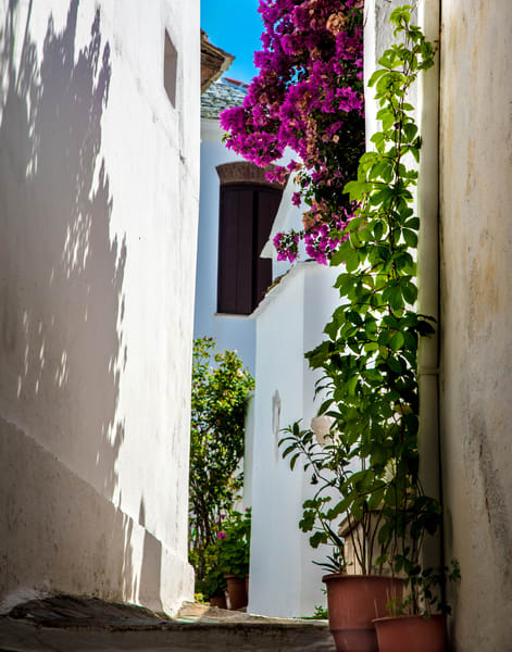 Shadow Of Flowers, Skopelos Photography Art | Ben Asen Photography