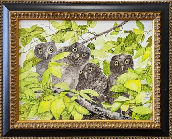 Berry Smith - original artwork - animals - birds - owls - watercolor - Owl Quartet