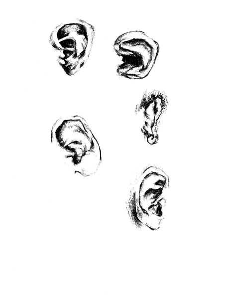ears drawing
