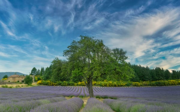 Provencal Home in the Lavender Fields of France
