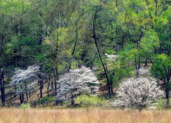 Flowering Trees Springtime