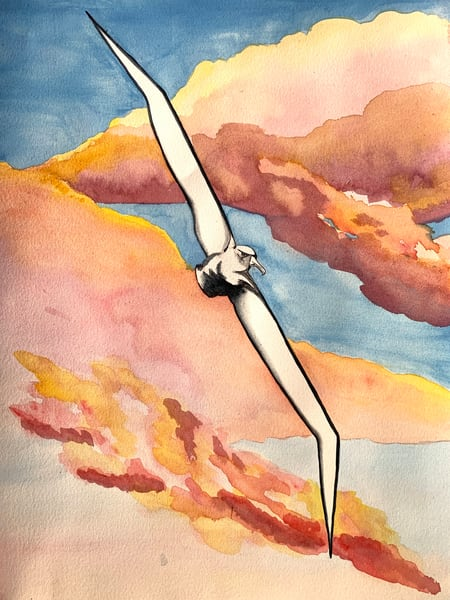 albatross, sea bird, sunset, ocean art, bird, largest wingspan, biggest bird