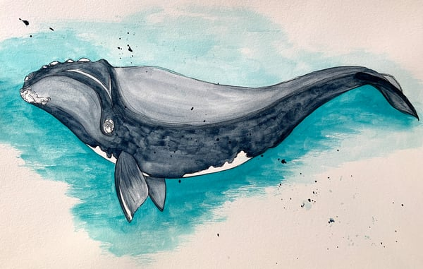 The Right Whale watercolor, pen and ink, mixed media, ocean art, ocean animal print for sale