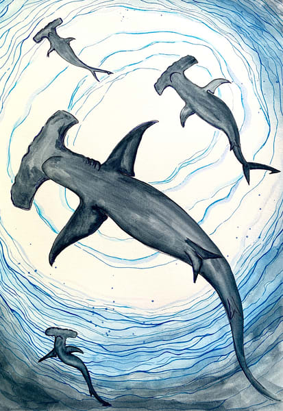 Hammerhead Sharks Shark fish watercolor pen and ink