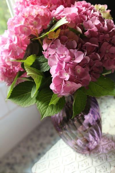 pink hydrangeas still life pink purple