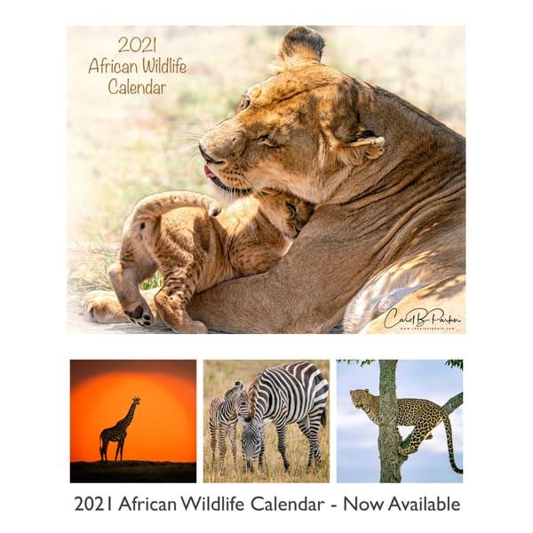 2021 African Wildlife Calendar New | Carol Brooks Parker Fine Art Photography