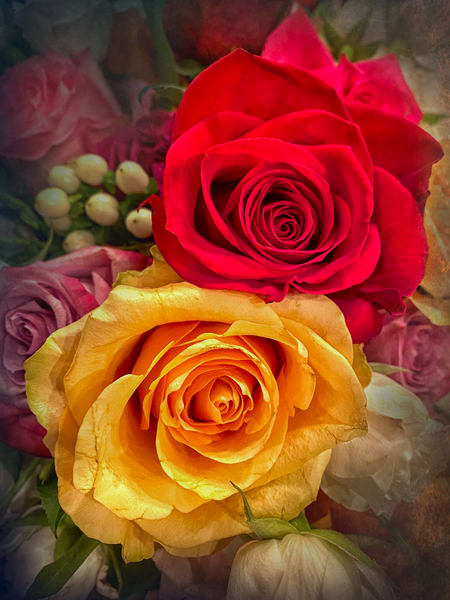 Two Roses Photography Art | Carol Brooks Parker Fine Art Photography