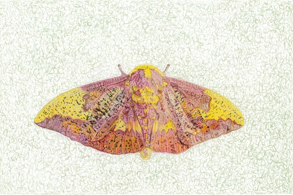 Imperial Moth Art | Digital Arts Studio / Fine Art Marketplace