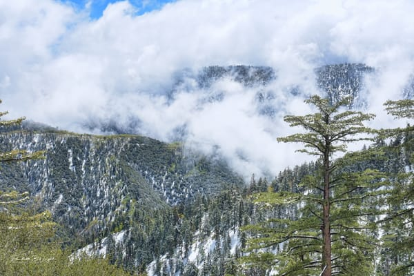 The Beautiful San Bernandino Mountains in Snow and Fog!
