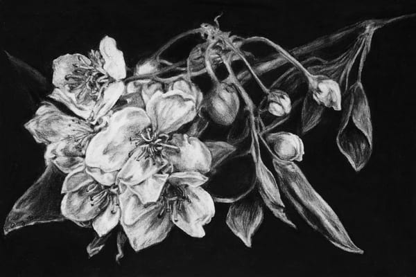 Dogwood Art | Mid-AtlanticArtists.com