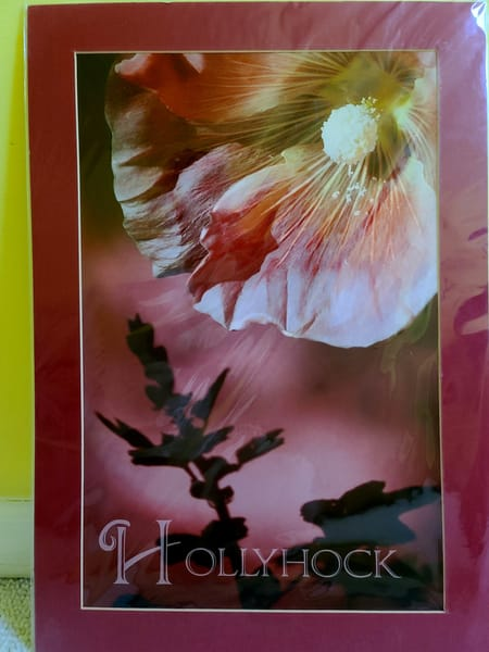 Hollyhock | An Artist's View Photography