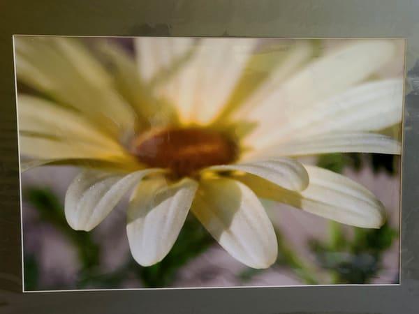 Daisy Full Face | An Artist's View Photography
