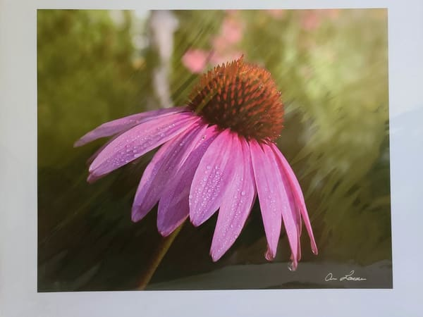 Cone Flower | An Artist's View Photography
