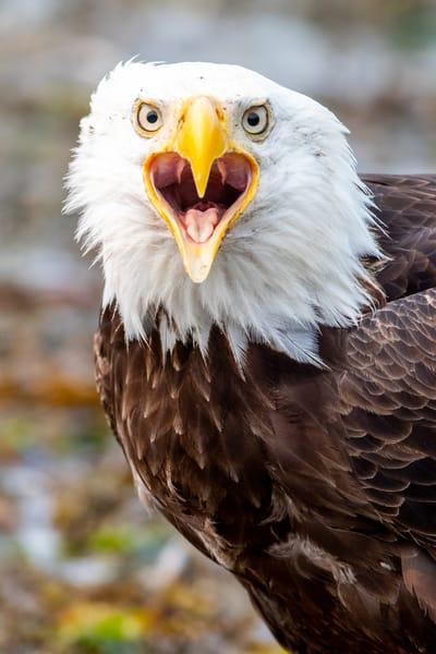 Juneau Alaska July 08 201902308 Photography Art | Brokk Mowrey Photography