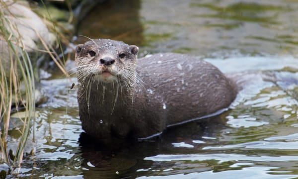 Scott McKay - photography - animals - otters - Willowbank Wildlife Reserve - New Zealand - What?