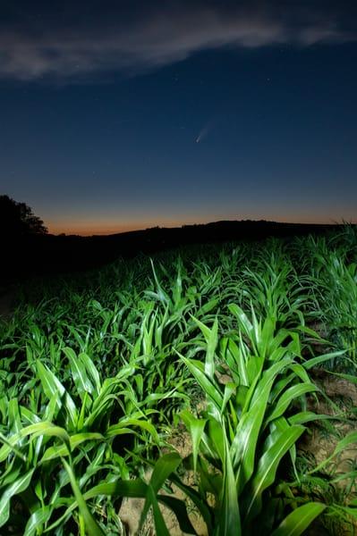 Comet Neowise in a corn field in Pennsylvania
